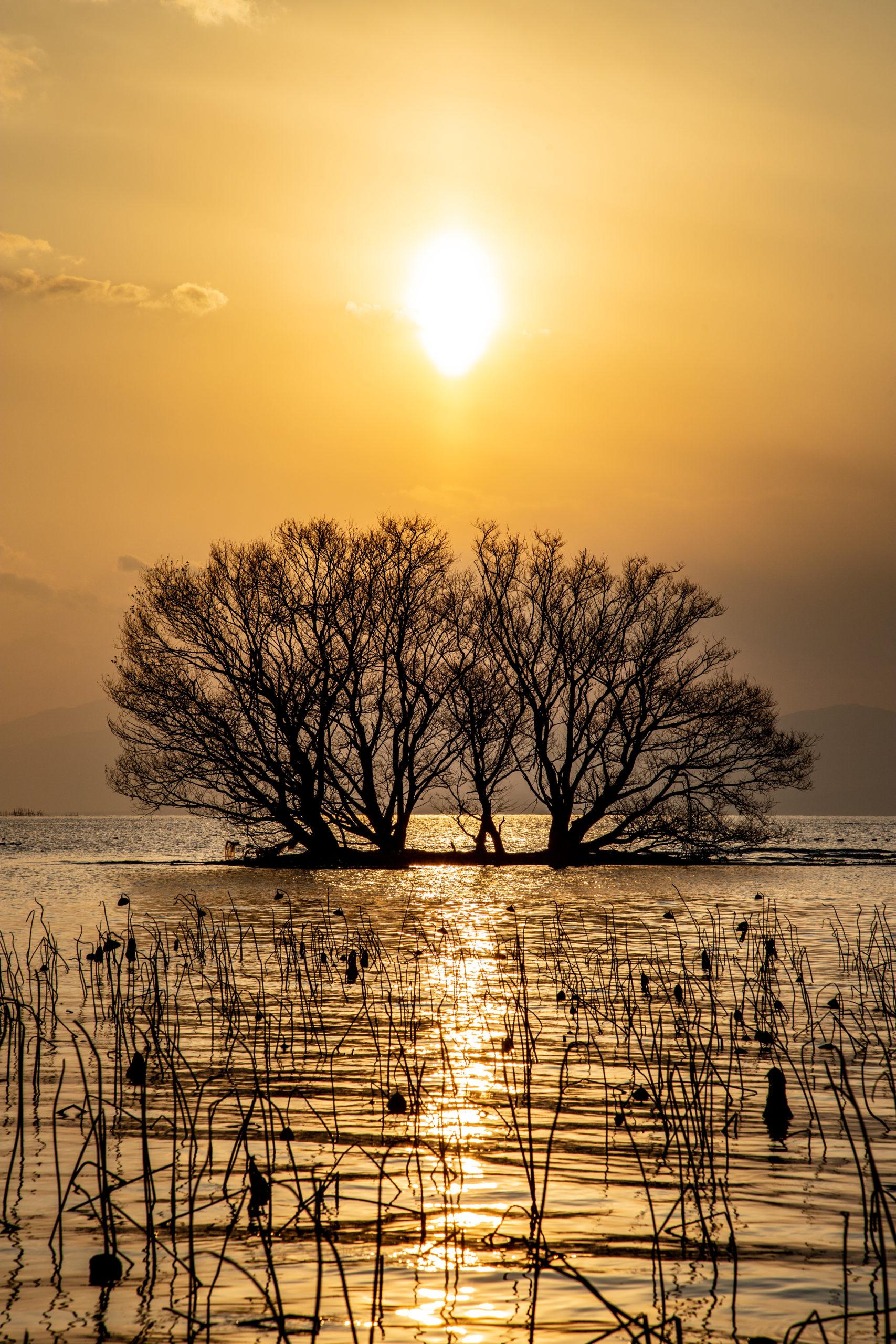 琵琶湖(滋賀県長浜市)  観光PR写真撮影の画像