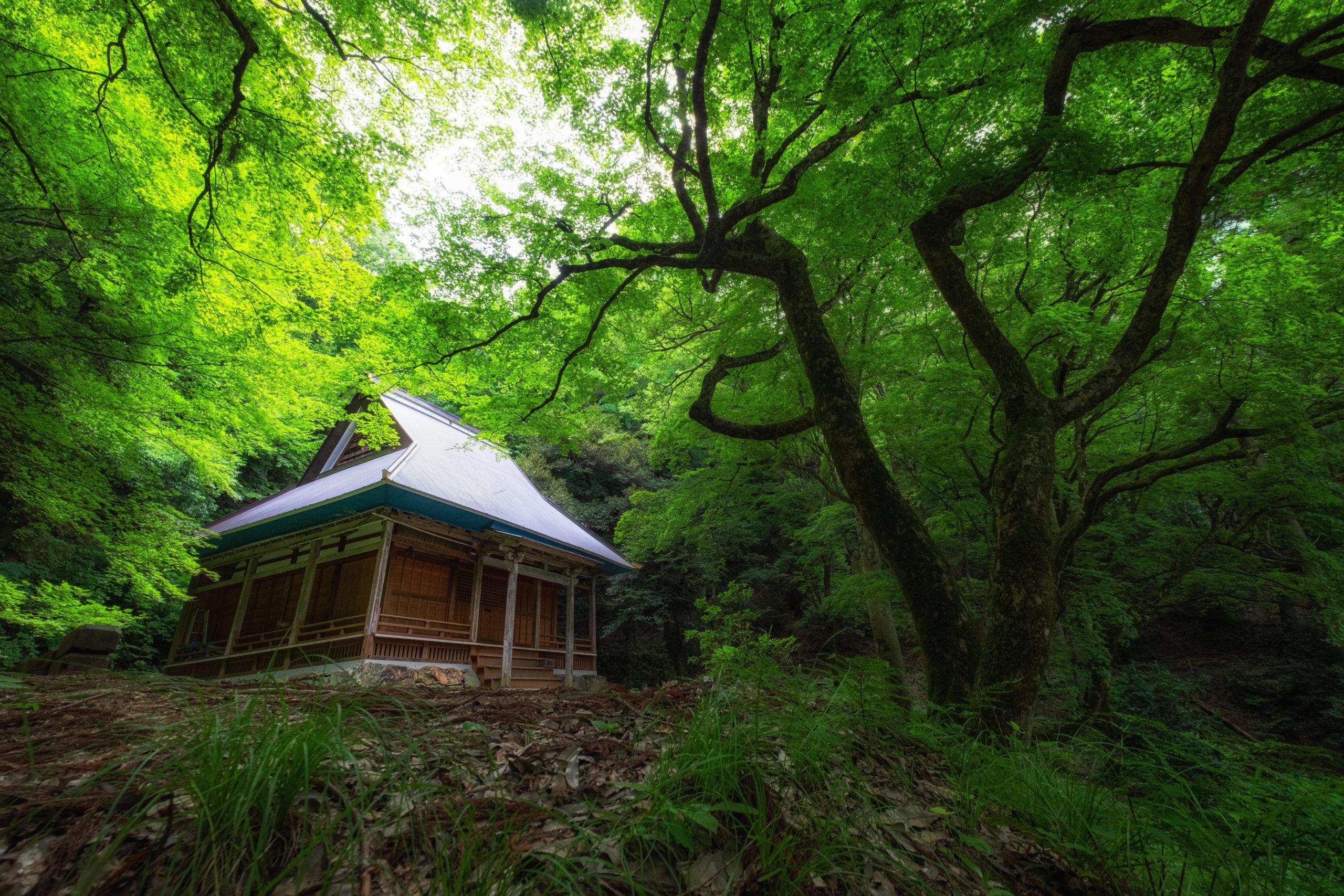 鶏足寺(滋賀県長浜市)| 観光PR写真撮影の画像