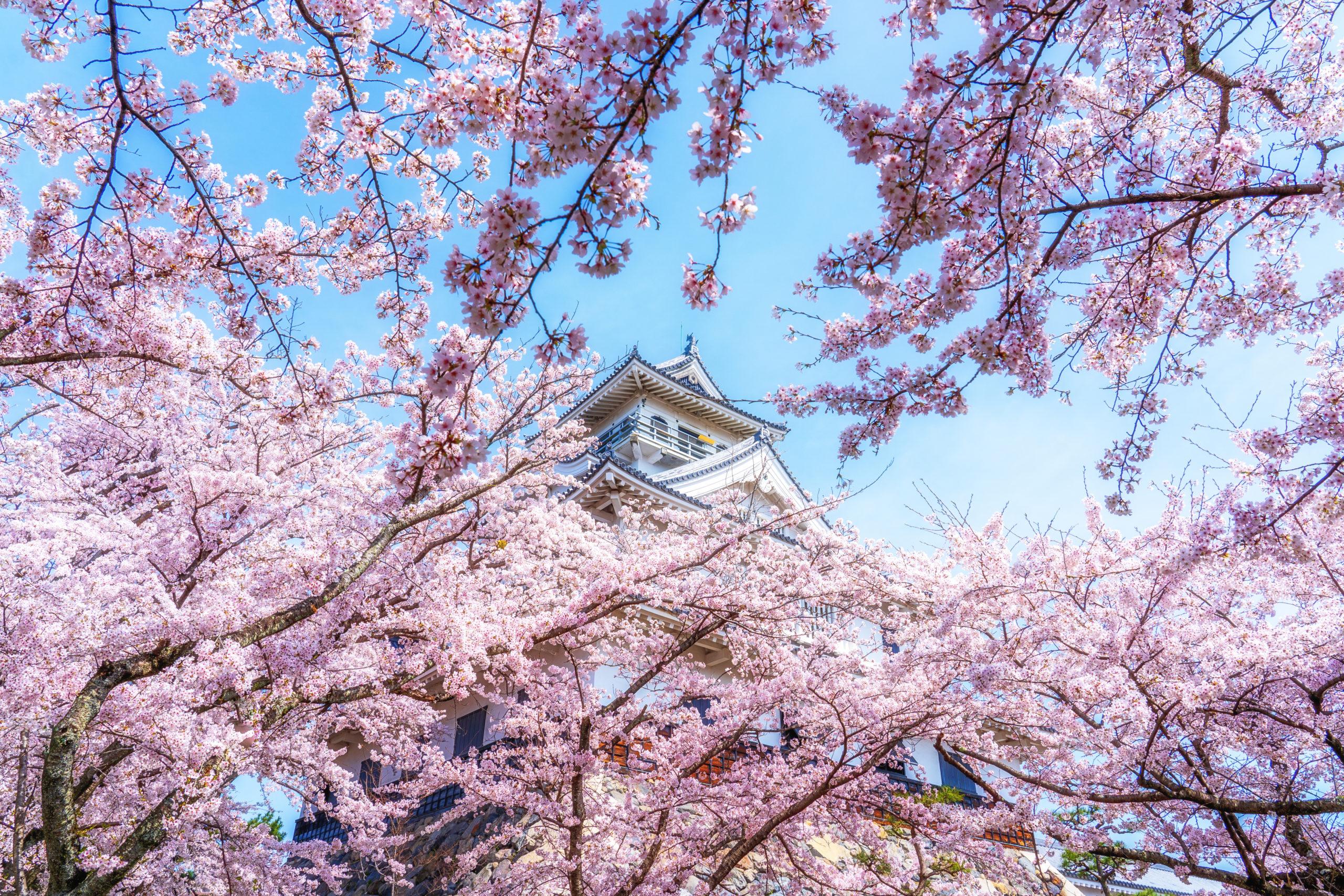 長浜城(滋賀県長浜市)  観光PR写真撮影の画像